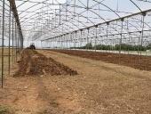 Inspección a las siembras de maíz en el sector La Mula. 19 de septiembre de 2013