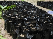 """Inicio de la reforestación de las zonas devastadas por efecto de incendios en el Parque Nacional """"Henri Pittier"""". 26 de mayo de 2013"""